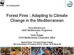Forest Fires Adapting to Climate Change in the