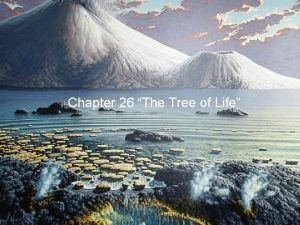 Chapter 26 The Tree of Life The Tree