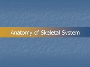 Anatomy of Skeletal System SKELETAL SYSTEM n COMPOSED