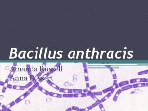 Bacillus anthracis Amanda Russell Anna Bossert Taxonomy Kingdom