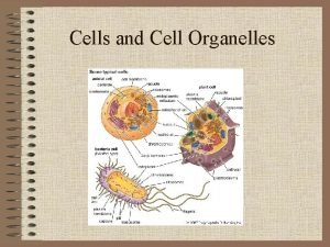 Cells and Cell Organelles History Anton Van Leeuwenhoek