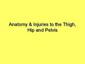 Anatomy Injuries to the Thigh Hip and Pelvis