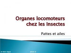 Organes locomoteurs chez les Insectes Pattes et ailes