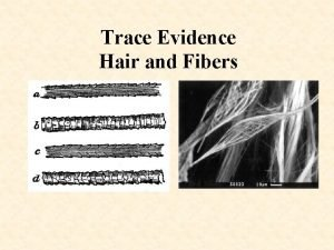 Trace Evidence Hair and Fibers Trace Evidence Any