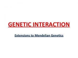 GENETIC INTERACTION Extensions to Mendelian Genetics GENETIC INTERACTION
