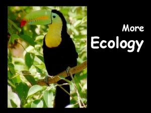 More Ecology WHAT IS ECOLOGY Ecology the scientific