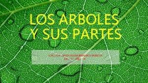 LOS ARBOLES Y SUS PARTES ECHO POR RAYZA