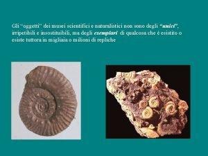 Gli oggetti dei musei scientifici e naturalistici non