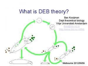 What is DEB theory Bas Kooijman Dept theoretical