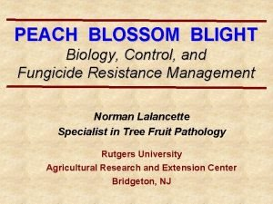 PEACH BLOSSOM BLIGHT Biology Control and Fungicide Resistance