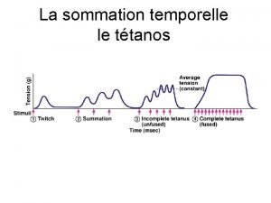 La sommation temporelle le ttanos Relation Tension Longueur