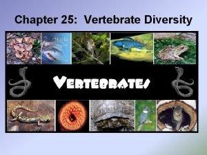 Chapter 25 Vertebrate Diversity 25 1 Vertebrate Origins