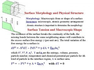 Surface Morphology and Physical Structure Morphology Macroscopic from