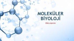 MOLEKLER BYOLOJ DNA onarm 1 DNA ONARIM MEKANZMALARI