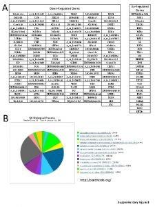 A UpRegulated Genes DownRegulated Genes LOC 401134 A33P