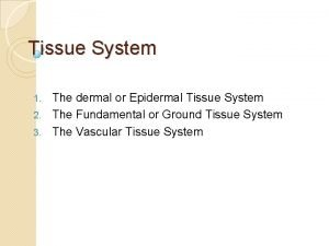 Tissue System The dermal or Epidermal Tissue System
