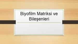 Biyofilm Matriksi ve Bileenleri Biyofilm Matriksi Biyofilm yapsnda