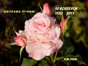 One rose for friendship A second one for