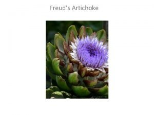 Freuds Artichoke Key Terms from Freuds The Interpretation