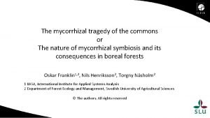 The mycorrhizal tragedy of the commons or The
