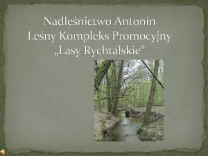 Nadlenictwo Antonin Leny Kompleks Promocyjny Lasy Rychtalskie Nadlenictwo