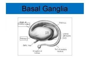 Basal Ganglia Basal Ganglia Refer to a group