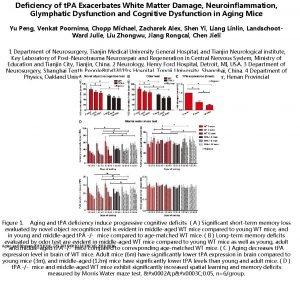 Deficiency of t PA Exacerbates White Matter Damage