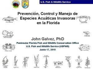 U S Fish Wildlife Service Prevencin Control y