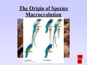The Origin of Species Macroevolution Biological Species Concept