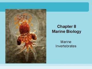 Chapter 8 Marine Biology Marine Invertebrates What Are