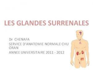LES GLANDES SURRENALES Dr CHENAFA SERVICE DANATOMIE NORMALE