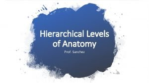 Hierarchical Levels of Anatomy Prof Sanchez Hierarchical Levels