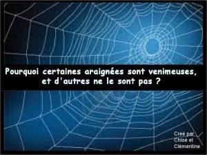 Pourquoi certaines araignes sont venimeuses et dautres ne