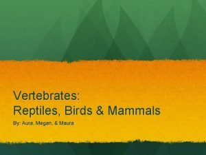 Vertebrates Reptiles Birds Mammals By Aura Megan Maura