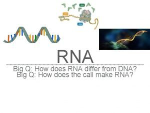 RNA Big Q How does RNA differ from