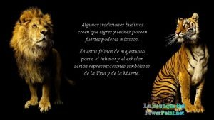 Algunas tradiciones budistas creen que tigres y leones
