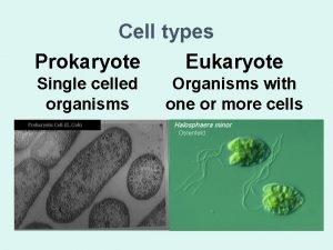 Cell types Prokaryote Eukaryote Single celled organisms Organisms