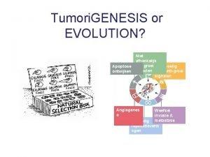 Tumori GENESIS or EVOLUTION Apoptose ontwijken Niet afhankelijk