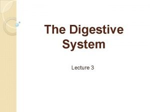 The Digestive System Lecture 3 The organs that