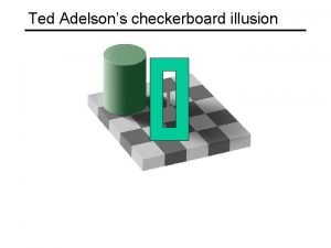 Ted Adelsons checkerboard illusion Motion illusion rotating snakes