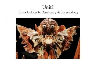 Unit 1 Introduction to Anatomy Physiology The Human