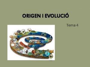 ORIGEN I EVOLUCI Tema 4 1 Origen de