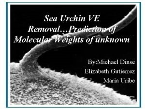Sea Urchin VE RemovalPrediction of Molecular Weights of