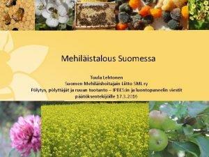 Mehilistalous Suomessa Tuula Lehtonen Suomen Mehilishoitajain Liitto SML