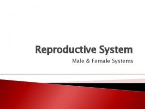 Reproductive System Male Female Systems Ha Ha The