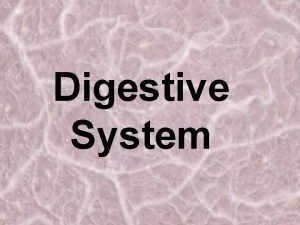 Digestive System Organs of the Digestive System mouth