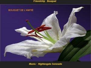 Friendship Bouquet BOUQUET DE LAMITI Music Nightengale Serenade