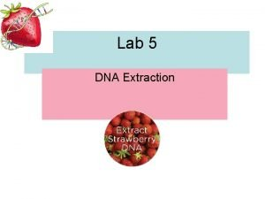 Lab 5 DNA Extraction 1 DNA Extraction from