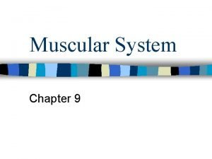 Muscular System Chapter 9 3 types of muscular