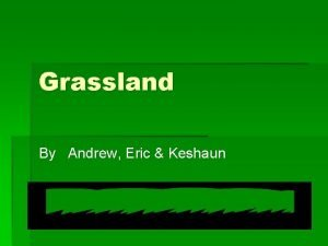 Grassland By Andrew Eric Keshaun Location The grassland